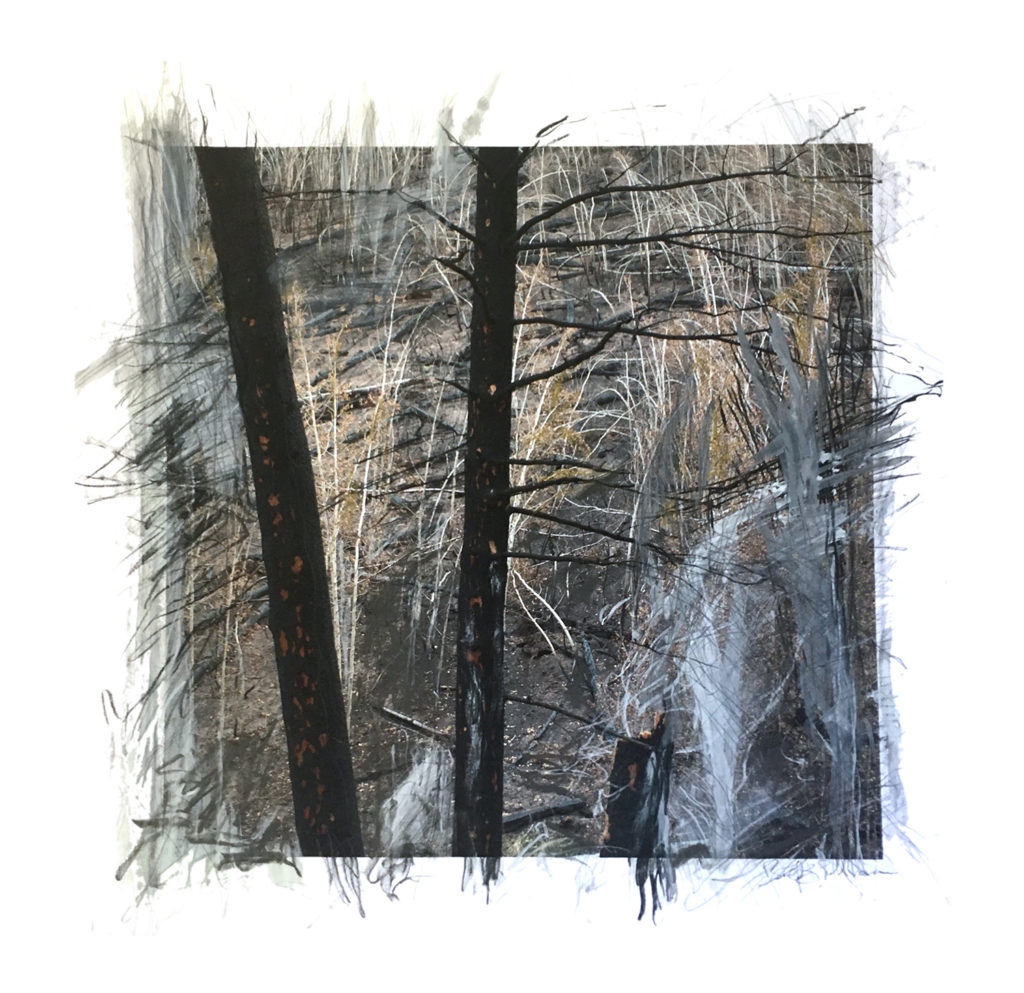 charred trees and burnt hill with grey and balck expressive lines drawn on top