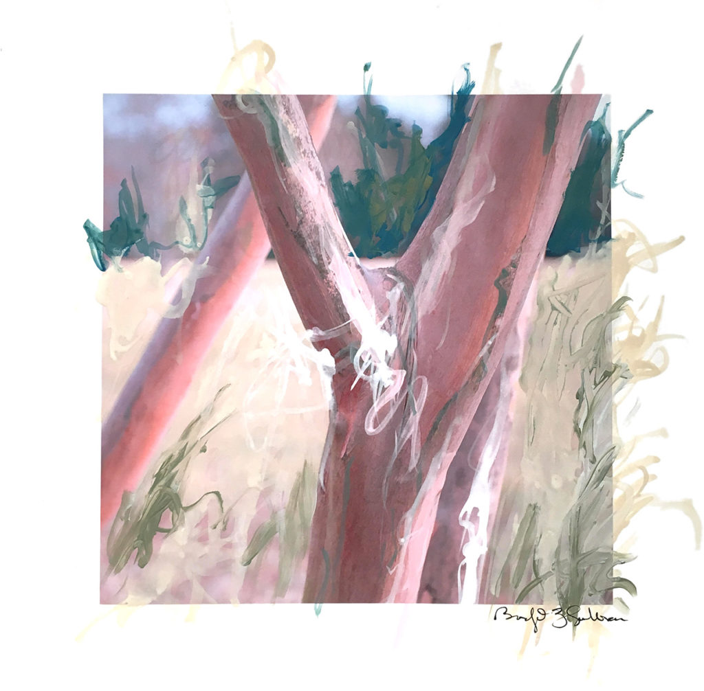 image of tree trunks with expressive painted and hand drawn marks on top of the image - background is blurred