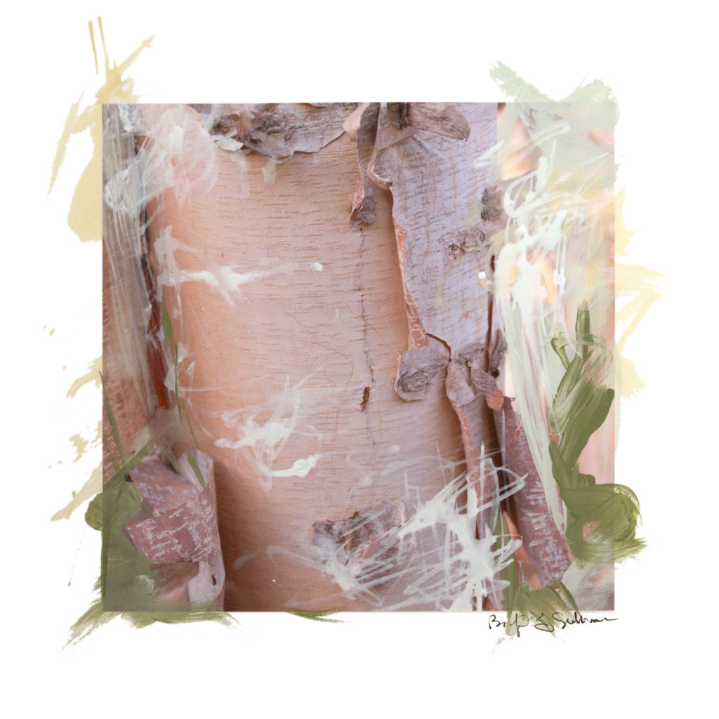 close up image of tree trunk, bark peeling, expressive paint and drawn marks on top of image